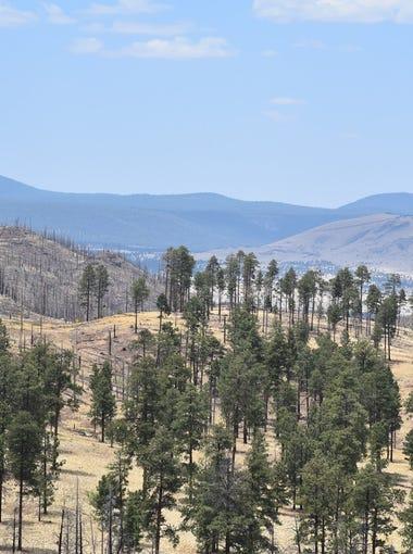 Greens Peak (left) and the Springerville volcanic field.