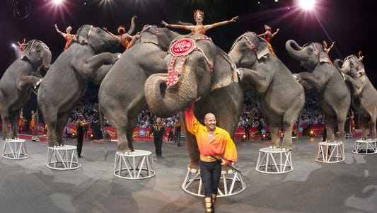 Elephants of the Ringling Bros. and Barnum & Bailey Circus.