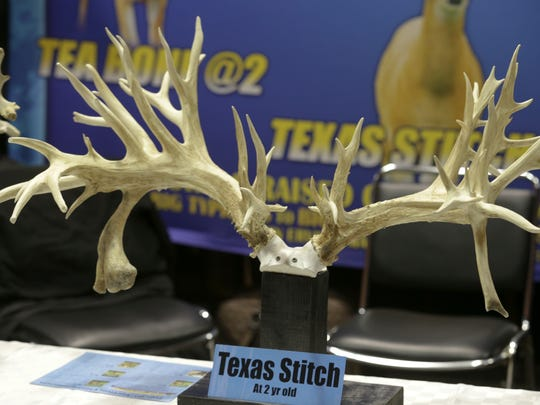 These farm-bred deer antlers were on exhibit at a deer industry auction near St. Louis.