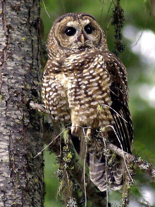 owl AP18010625129390.jpg