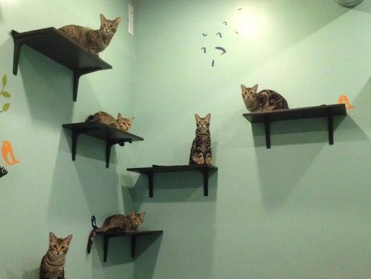 Kittens enjoy lounging on perches at New Beginnings