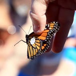 Monarch Madness at Fennessey Ranch
