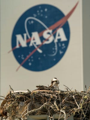 An Osprey awaits its mate's catch in front of the Vehicle Assembly Building at Nasa's Press Site.