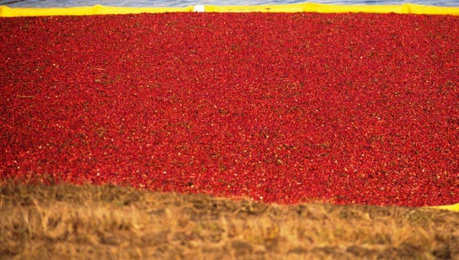 this year's abundant harvest adds to existing financial stress on growers