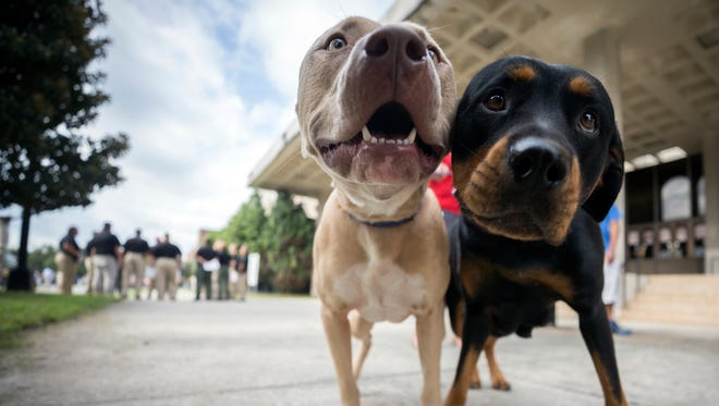 Two pet dogs wait while their owner registers them with the pet evacuation team at the Savannah Civic Center on Saturday in Savannah, Ga. Powerful Hurricane Irma is expected to impact the state on Monday morning.