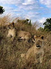 Peggy Heacock's trip to Kenya, Africa for her mother's