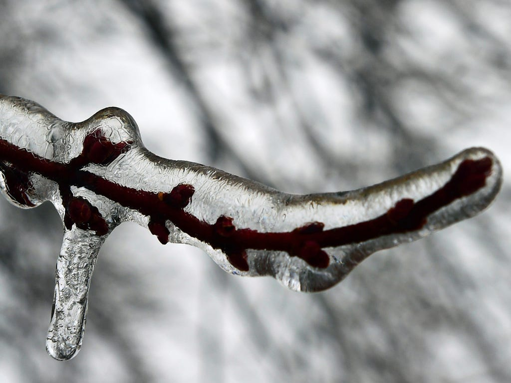 A tree limb is encased in ice after an overnight storm in Chambersburg, Pa.