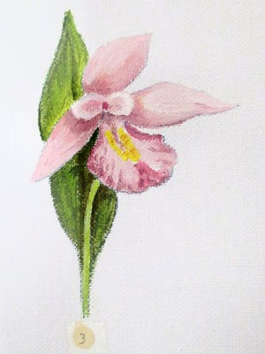 Lois Nestel's orchid paintings are one of the many fragile and hidden-away museum collections that you can view using our Virtual Exhibit