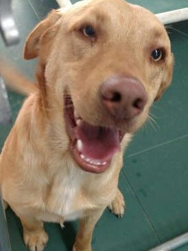 Pet of the day: Rugar