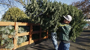 Area groups want to take Christmas tree off your hands