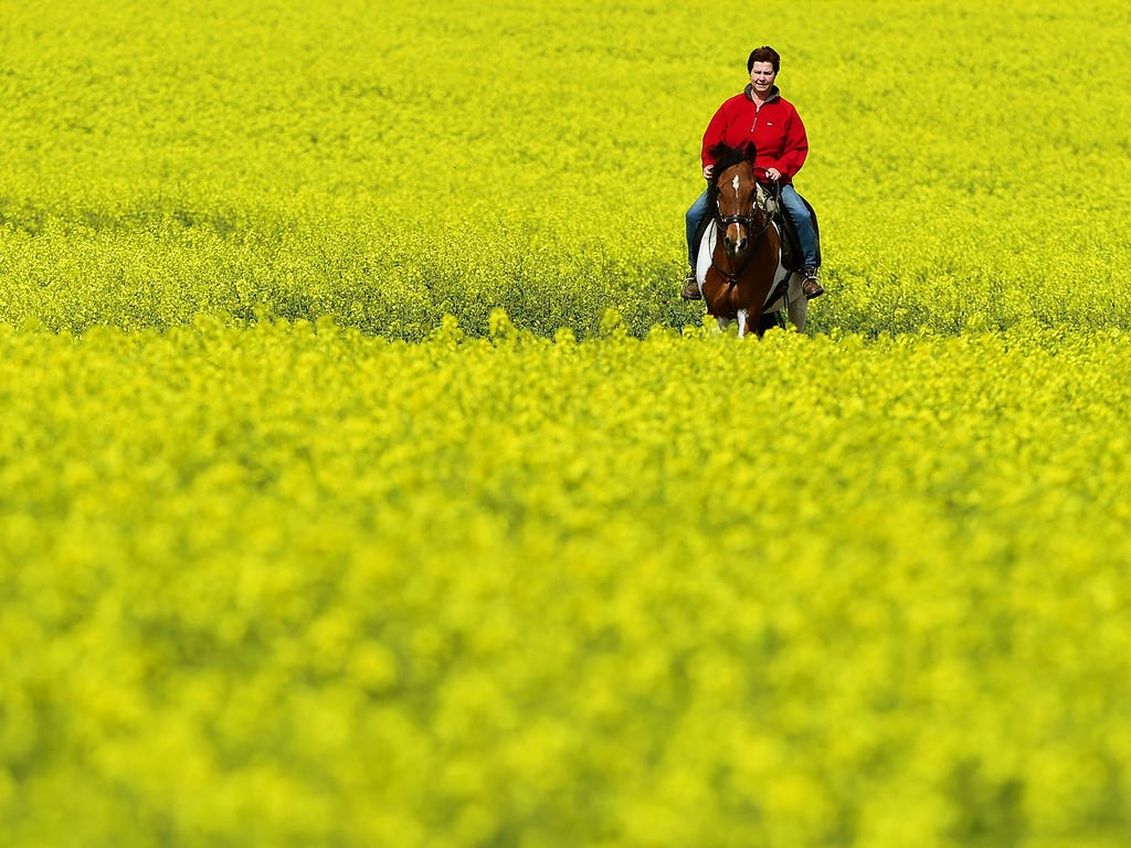 Anja Mueller rides her horse, Dreamer, along a path between blooming fields on April 29 near Idstein, Germany.