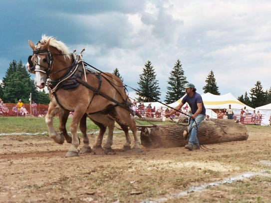 A team of horses works during the pulling contest at
