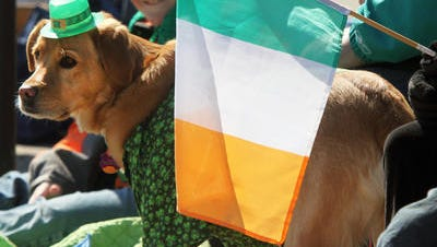 Spectators -- including a dog decked out for the occasion -- watch last year's Ocean County St. Patrick's Day Parade in Seaside Heights