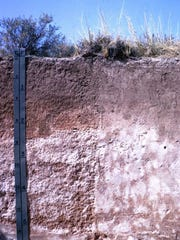 This soil horizon shows build up of calcium carbonate deeper down that indicates possible hardpan drainage impediment.
