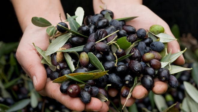 Join Oregon Olive Mill and Durant Vineyards in celebrating the Oregon olive harvest at Olio Nuovo Festa at the Oregon Olive Mill.