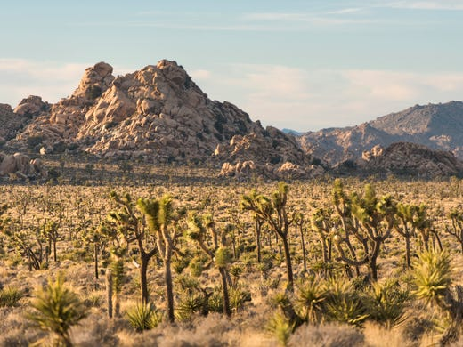 Joshua Tree National Park celebrates its 83rd birthday: A look into The Desert Sun archives