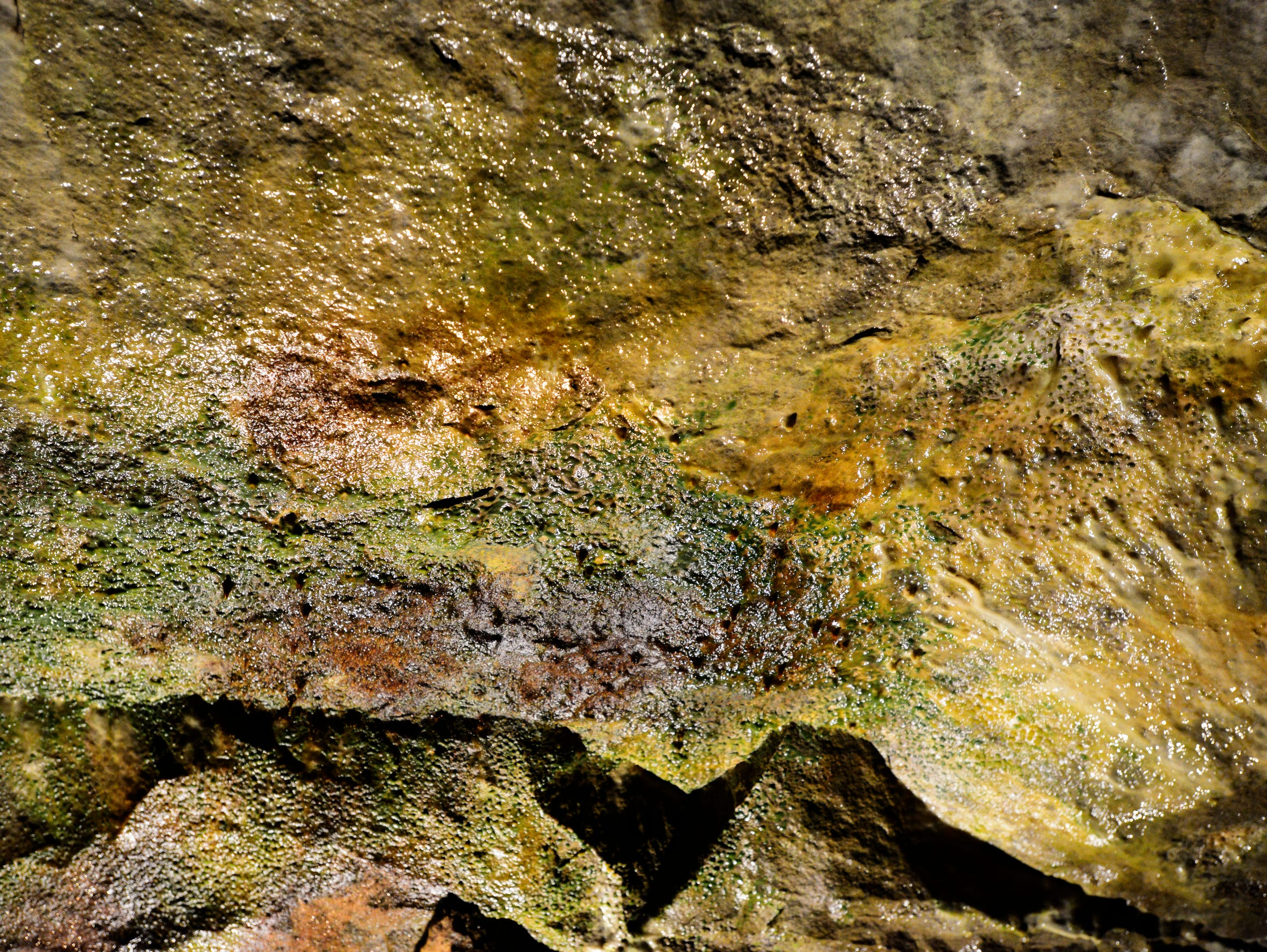 Seneca Caverns holds fossils from the great shallow