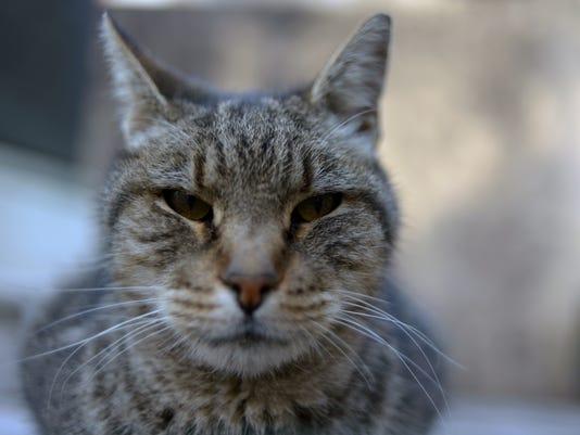ARGENTINA-CAT-FEATURE