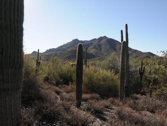Carol Bartol Preserve at Saguaro Hill