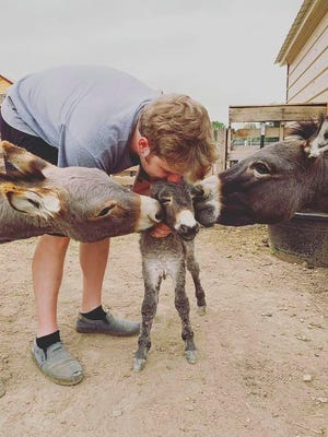 A visitor to the Shepperly Farm Petting Zoo shares a kiss with two burros and their new baby in this image that farm owner Ashley Shepperly, who also is a photographer, captured.