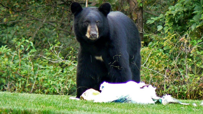 A bear sighting in Wayne, NJ.