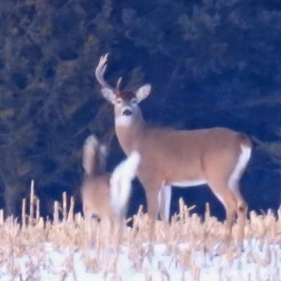 More deer hunt options up for vote at hearings