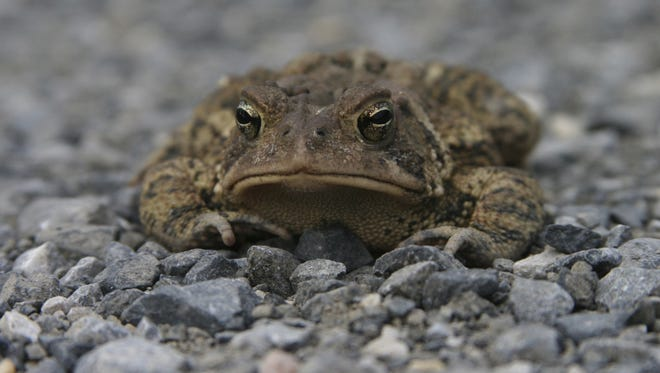 I'm feeling about as grumpy as this creature looks.