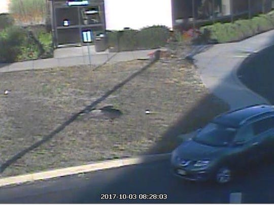 Willingboro police are seeking the public's help in identifying the driver of this car. They believe it's a Nissan Rogue and the driver allegedly brandished a weapon after a verbal altercation with a pedestrian.