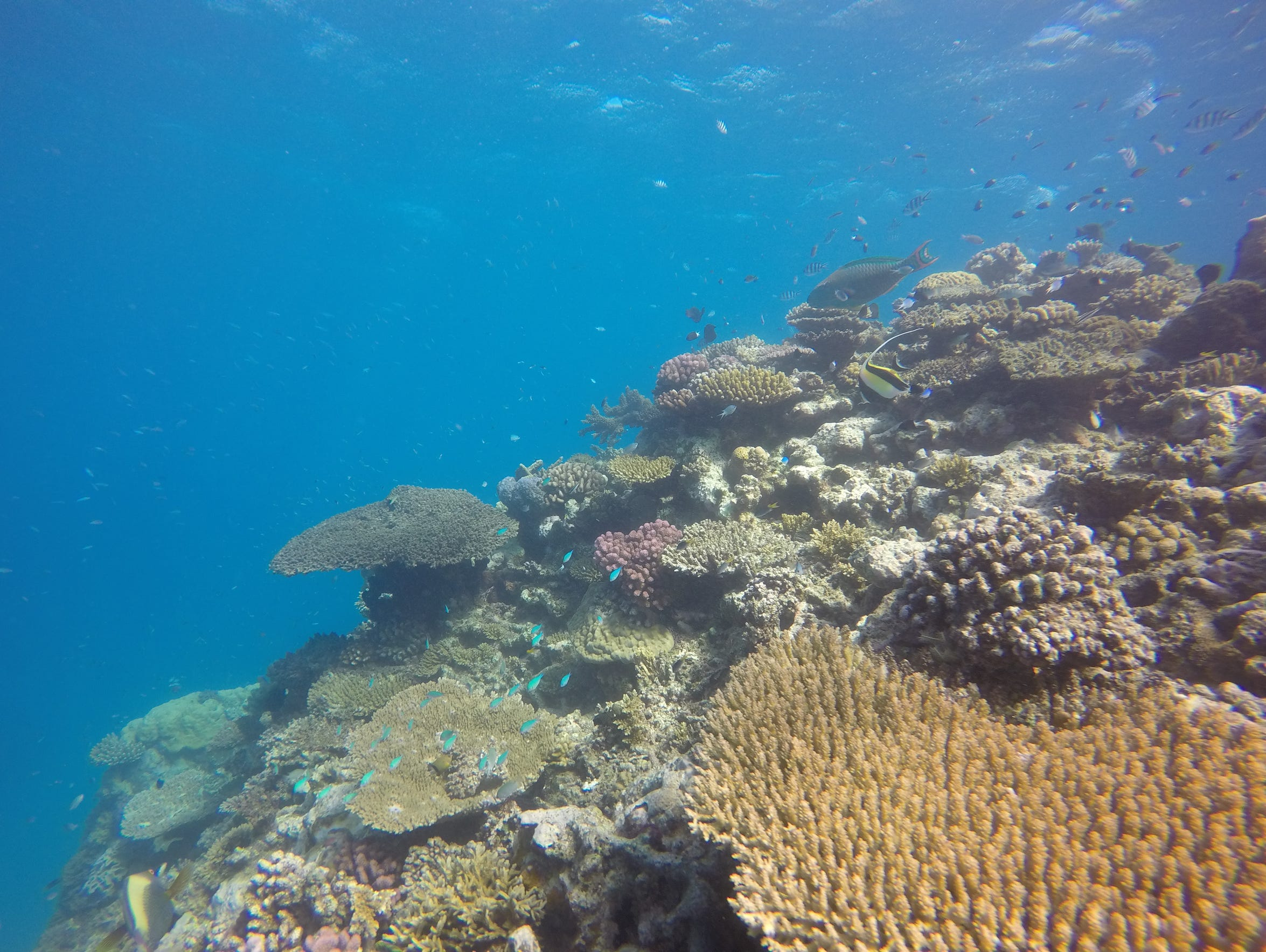 Corals and fish form a kaleidoscope of life along the Great Barrier Reef.