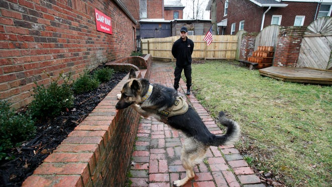 Michael Davis, owner of The Last Chance K9 Service, in New Albany, watches as his dog Oakley. locates a packet of drugs hidden in the landscaping at his business.  The company offers it services to parents who are concerned thier child might be using drugs. Feb. 24, 2016.