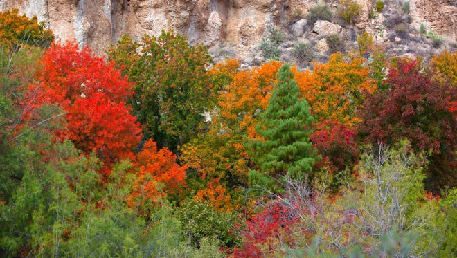 The Boyce Thompson Arboretum near Superior has brilliant displays of fall color.