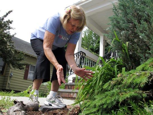 Plant thefts plague burlington gardeners for The gardener burlington
