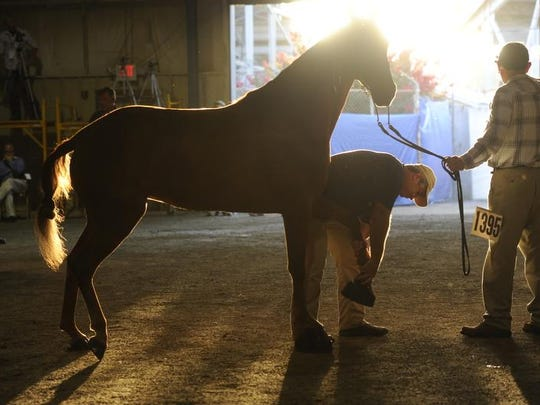 Presley was so horrified by the soring practice that she decided in late 2013 to end the Graceland Challenge Trophy award at the nation's premier walking horse competition in Shelbyville, Tenn. The trophy had been awarded since 1983.