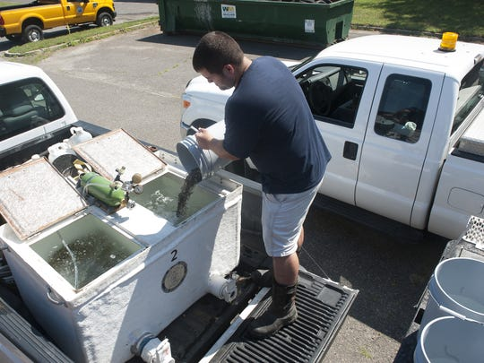 Camden County Mosquito Control Lab Supervisor Tyler Tresslar dumps a bucket full of minnow fish into a tank at the Camden County Mosquito Control Lab. More than 100,000 fish being distributed into a new hatchery constructed by the Camden County Mosquito Control Commission.