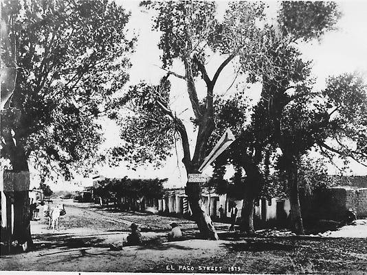 NEWSPAPER TREE 1880