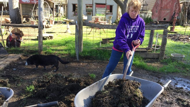 Chic Miller, who runs Bella Vista Farms with her husband, Bob, cleans a pen recently. The farm is home to some 300 animals.