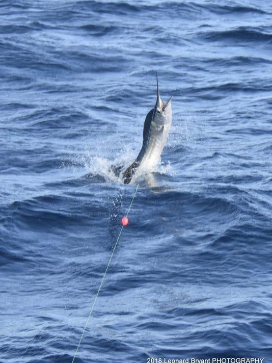 636691637279442835-5---leonard-sailfish.jpg