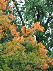Trees start to change into their fall colors off of