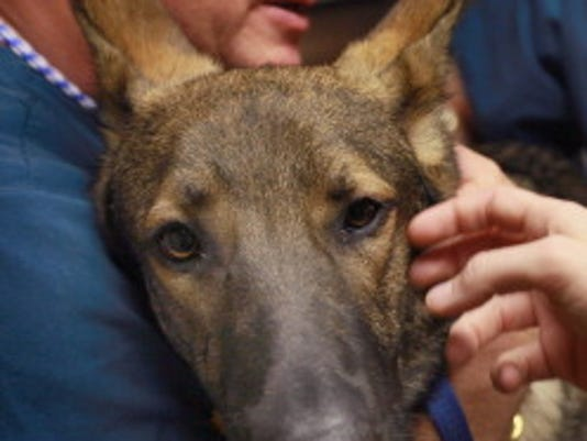 Service Dog Helps Wounded Veteran Cope With PTSD