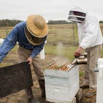 Although honey bees declining, La. faring well