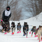 """University of Iowa Nonfiction Writing Program graduate Blair Braverman with sledding dogs. Braverman's first book, """"Welcome to the Goddamn Ice Cube"""" explores her years of dog sledding in the far north of Alaska and Norway. Photo by Aladino Mandoli."""