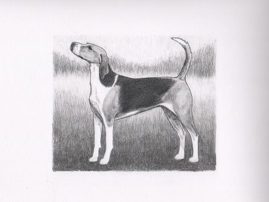 """""""American Foxhound"""" is one of the drawings by local"""
