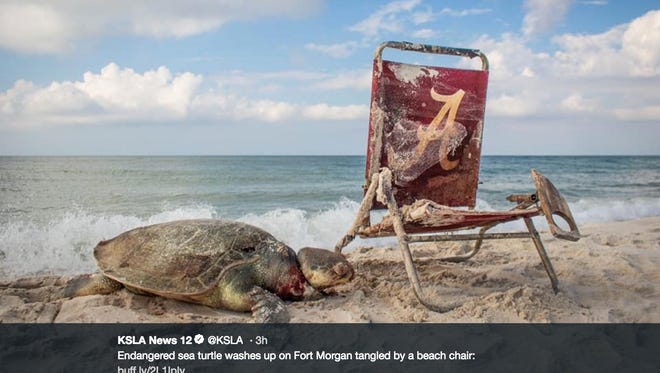A tweet from KSLA-TV with an image of a sea turtle tangled in a beach chair.