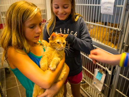 Morgan Pruin of Ankeny holds a cat up for adoption at the Animal Rescue League of Iowa in Des Moines Friday July 11, 2014.