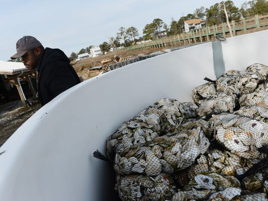 Billy Wharton walks by an outdoor tank filled with bags of oyster shells at Tom's Cove Aqua Farms on Chincoteague, Va. on Tuesday, Jan. 26, 2016. When the temperature begins to warm the tank will be filled with water and oyster spat, which will attach themselves to the empty shells. The young oysters will be later transported to beds around the island to mature.