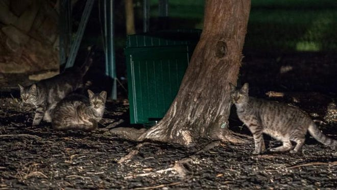 Palm Beach Island Cats cares for hundreds of cats on the island each night all year long.