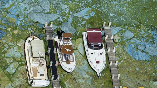 Boats docked at Central Marine in Stuart are surrounded by blue green algae, June 29, 2016.