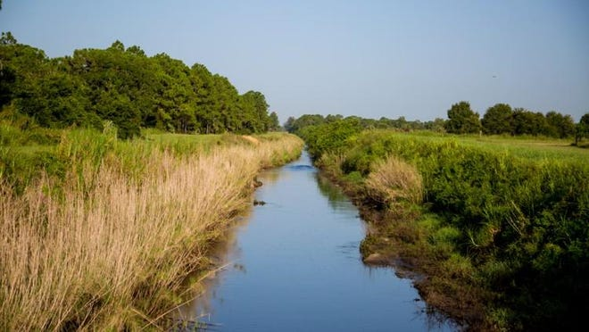 A canal on the northern end inside the Cypress Creek Natural Area in Jupiter on August 9, 2018.