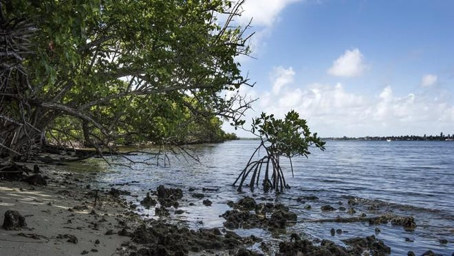 The Lake Worth Lagoon, a major estuary in Palm Beach County, may benefit if voters approve a $150 million bond to pay for environmental projects.