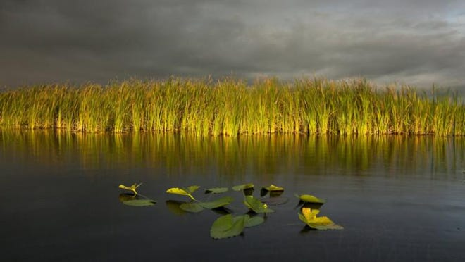 Photographer Mac Stone illustrated his December talk about his mission to save Florida's wetlands with images like this one depicting Lake Okeechobee. The talk was part of an Everglades and clean water forum held in December at The Society of the Four Arts.